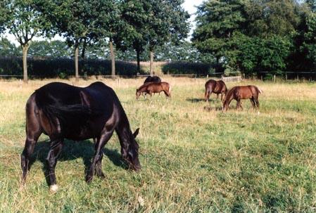 Alle ponies El voorop 24-8-03
