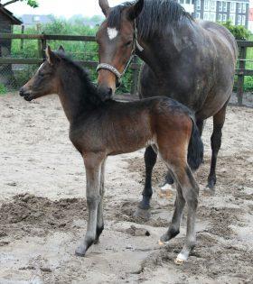 Westervelds Feline met mama totaal 23 mei 2016 net geboren