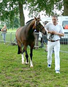2015 Westerveld's Lieve RK Hengelo 2015 stap