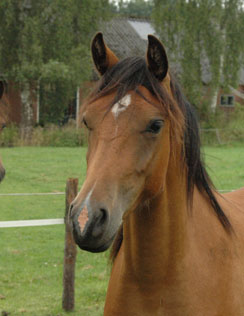 altrido alets fioletta hoofd 2012