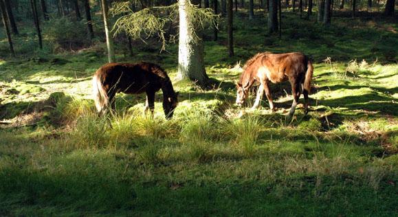 14-10-07 Telperion en Ivrin grazen