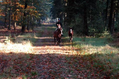 14-10-07 veulens en Ekkaia bos
