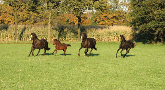 16-10-11_merries_veulens_galop