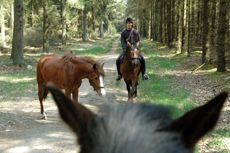 17-4-09 Dier's oren, Fëanor-Ivrin in bos