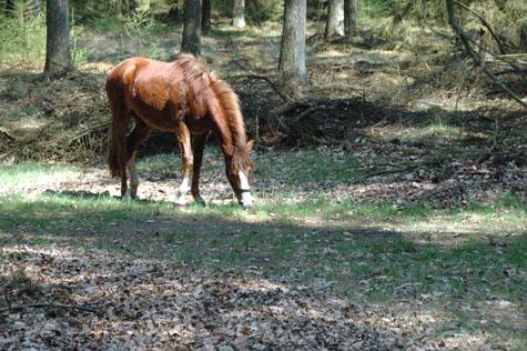 17-4-09 Ivrin in bos grazen in zon