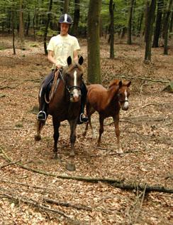 17-8-08 met veulens in bos 6