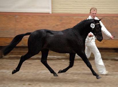 2006 JHK Holthausen Sindar 1