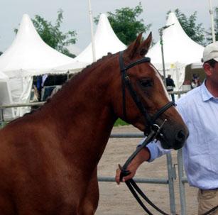 2006 Rohan op show in frankrijk hfd