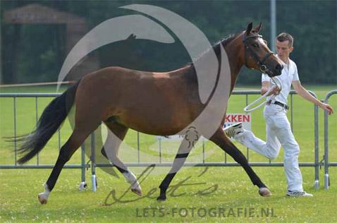 2015 Altrido Tosca's Florijn KR Norg