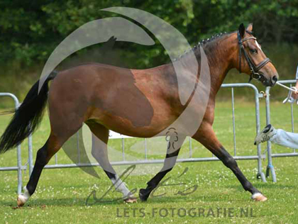 2015 CMK altrido_toscas_florijn_4_20150705_1730475651