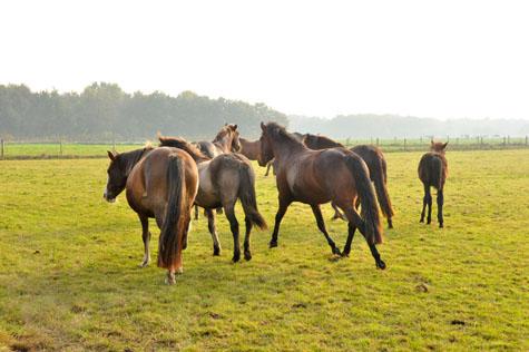 22-10-12 alle ponies eowyn draven