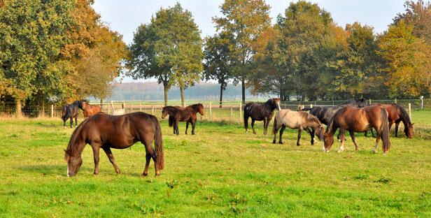 22-10-12 alle ponies1