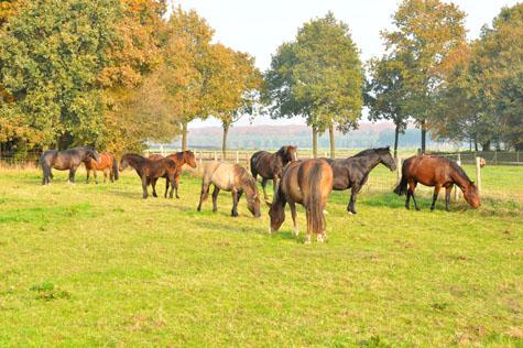 22-10-12 alle ponies2