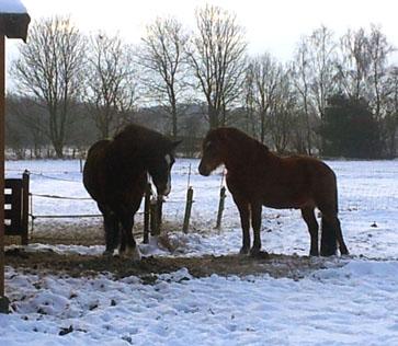 24-1-13 Dier en Fëanor sneeuw