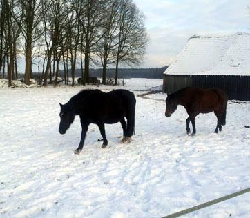 24-1-13 Nienna en Éowyn sneeuw