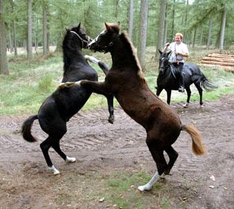 24-9-06 Faramir en Tirion bos steigeren