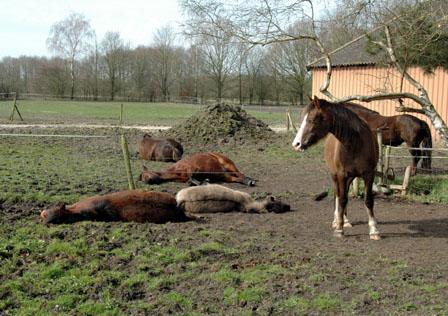 26-3-12 alle ponies liggen2