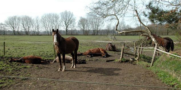 26-3-12 ponies liggen 1