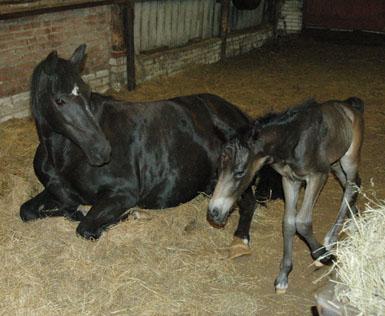 26-5-09 Lórien net geboren met Nienna
