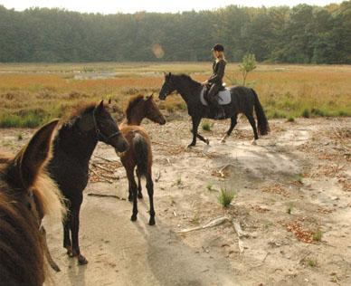 27-9-09 merries met veulens in bos 13