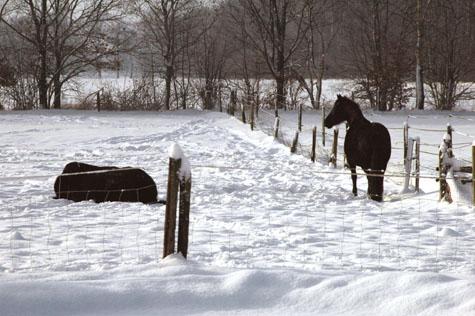 3-1-10 Ellie liggen en Nienna in de sneeuw