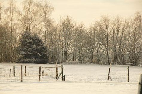 3-1-10 sneeuw in de wei