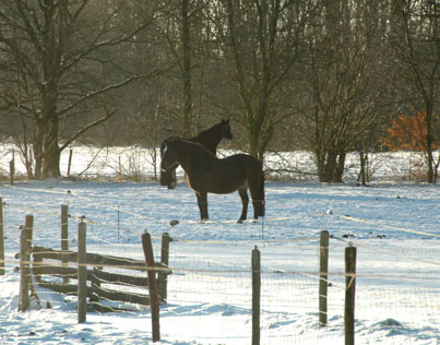 30-12-10 Dier en Nienna in de sneeuw