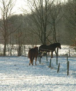 30-12-10 Glorfindel en Feanor in de sneeuw