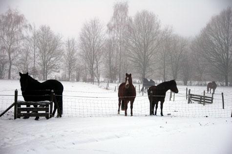 30-12-10 ponies in de sneeuw