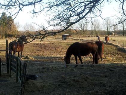 7-4-13 ponies totaal