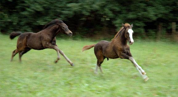 7-8-06 Faramir en Tirion racen