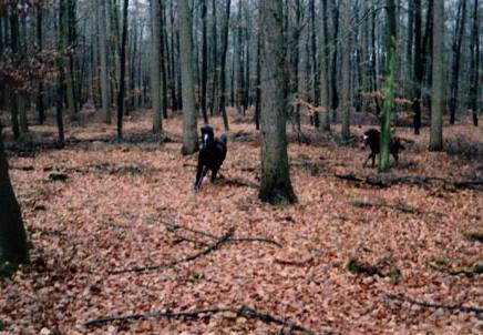 Aelin en Fëanor in bos 26-11-00