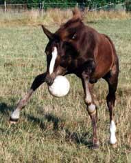 Alle ponies Rohan springt met bal in mond 24-8-03