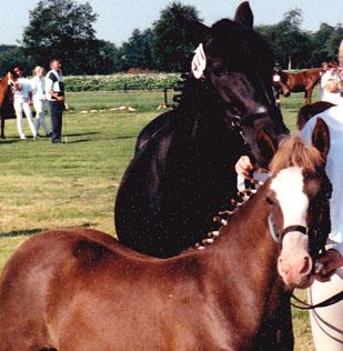 Arwen RK Peize 1997