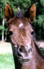 Black Guinea 3-8-98 hfd alert