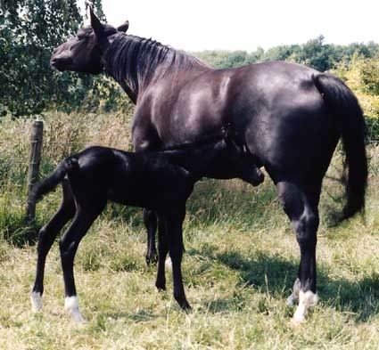 Ellie en Nienna4 juli 1995