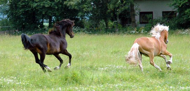 Frodo 25-6-06 en Waron rennen 2