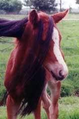 Gwindor met staart Nienna 13-5-1999
