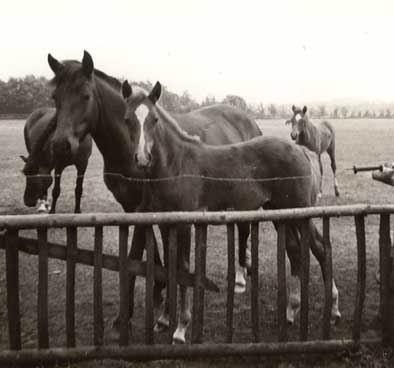 Maid en Elfje iets groter 1975