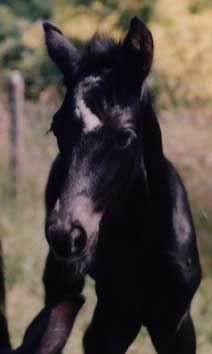 Nienna juli 1995