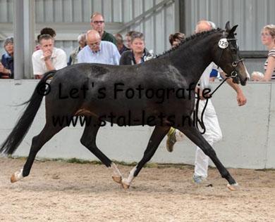 RK Norg 2014 westervelds sterre kampioenskeuring3