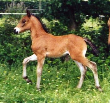 Silbersee Fabian1 2004